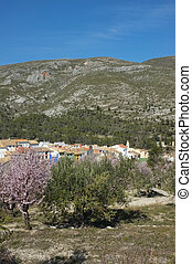 Mediterranean village tucked amidst olive and almond tree...