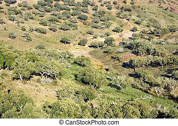 Mediterranic forest at Portugal.