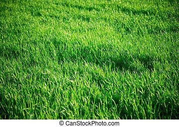 medium, gräs, seamless, längd, belägga med tegel, texture.