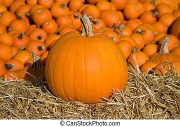 Medium Pumpkin on Hay - Medium sized pumpkin on hay bale...