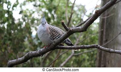 Beautiful blue bird sitting on a brunch.