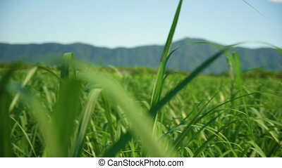 Medium shot of grass - A medium shot of grass while rotating...