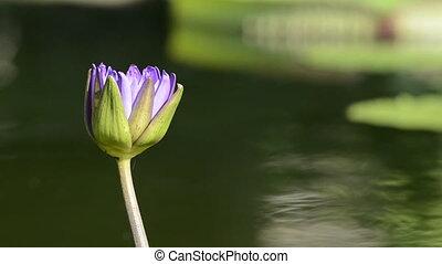 Medium Shot of Purple Flower - A medium shot of a purple...