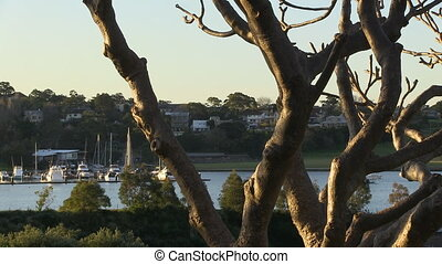 Medium shot of trees and yacht - A medium shot of trees and...