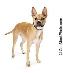 Medium Size Light Color Crossbreed Dog