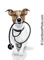 medizin, hund, doktor