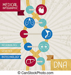 medizin, infographic, dna.