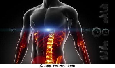 medizin, schirm, brust, menschliche