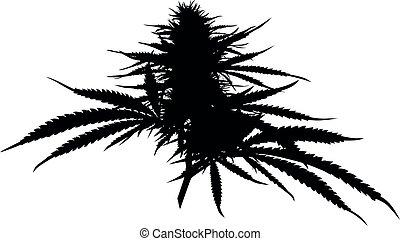 medizin, silhouette, auch, knospe, cannabisbetrieb, bekannt, hashish., marihuana