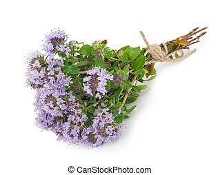 medizinisch, thymian, plant: