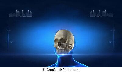 medizinische röntgenaufnahme, überfliegen, skelett