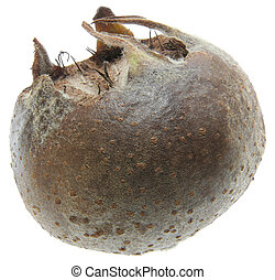 Medlar - Full focus of medlar studio isolated on white ...