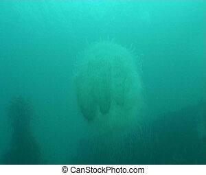 medusa underwater diving video - underwater diving video
