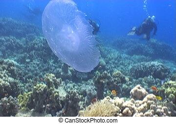 medusa underwater video - underwater video