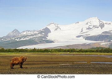 medvěd grizzly, do, krajina, s, snowcapped, mountais