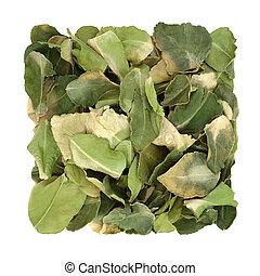 medycyna, ziołowy, wapno, ziele, liść, kafr