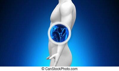 medyczny mają rytm, -, rentgenowski, splin