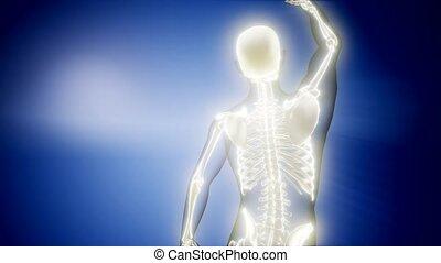 medyczny, radiografia, szkielet, ludzki, skandować