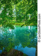 meer, in, bos