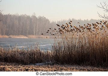 meer, pogoria., winter tijd, landscape, in, polen