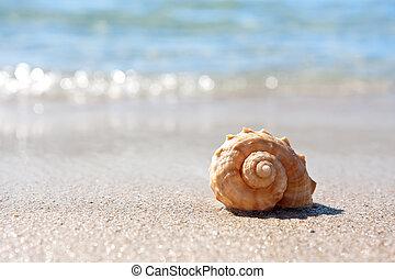 meeresmuschel, auf, der, sandiger strand
