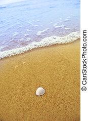 meeresmuschel, auf, sandiger strand