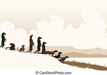 meerkat, lookouts