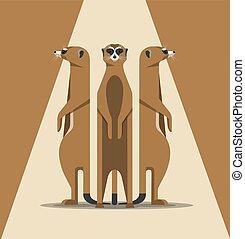 meerkats, basking, sol, familia