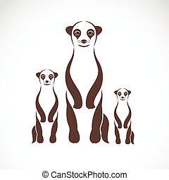 meerkats, imagen, vector, fondo blanco