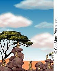 Meerkats standing on big rocks