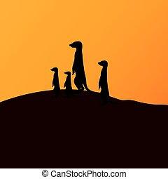 meerkats, vector, grupo, ilustración