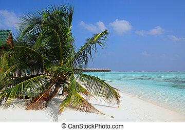 meeru, maldives, -, ilha