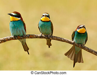 Meeting of three birds on a branch