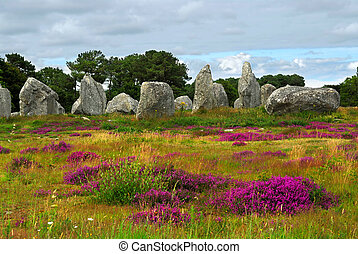 Megalithic monuments in Brittany - Heather blooming among...