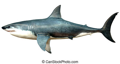 Megalodon Side Profile - Megalodon is an extinct species of...