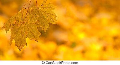 meget, blade, lavbundet brændvidde, efterår, baggrund, appelsin