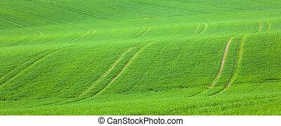 megjelöl, alatt, a, zöld terep