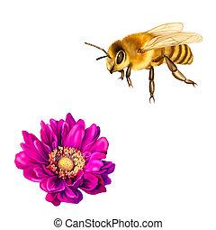 meglehetősen, méh, mona lisa, virág, rózsaszínű virág,...