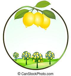 megművelés, citrom