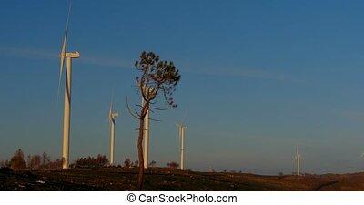 mehrere, windmühlen, auf, a, energieversorger, portugal