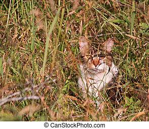 mehrfarbig, katz, in, der, großes gras