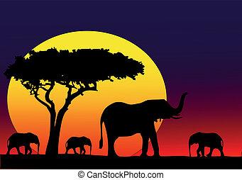 mein, afrikas