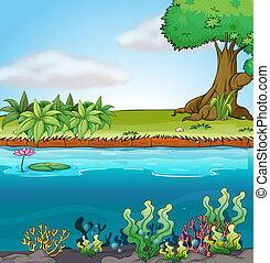 meio ambiente, aquático, terra