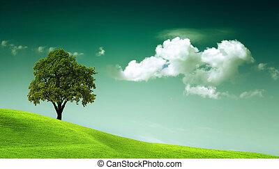 meio ambiente,  natural, poder