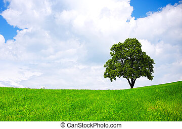 meio ambiente, verde