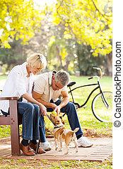 meio envelheceu, par, tocando, com, animal estimação, cão, ao ar livre
