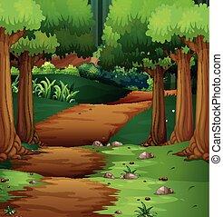 meio, floresta, cena, estrada, sujeira