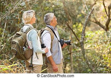 meio, par, observar, envelhecido, pássaro, floresta
