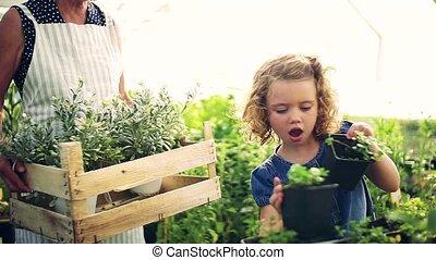 meisje, grootmoeder, tuinieren, senior, greenhouse., kleine