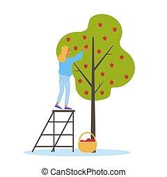 meisje, staande vrouw, boom., appel, bijeenkomst